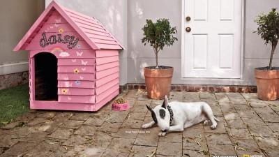 National Geographic, Dog Whisperer - Daisy
