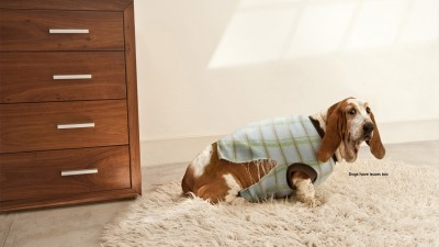 National Geographic, Dog Whisperer - Fat dog