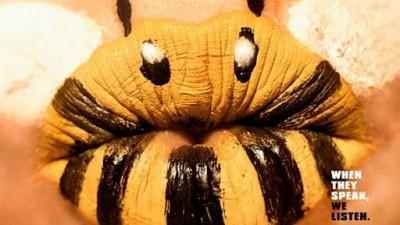 Conservacao Internacional - Bee