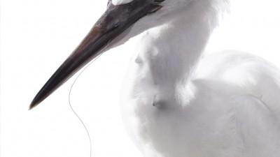Rapala Fishing Equipment - Bird