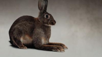 BMW - Rabbit