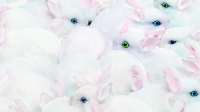 Nikon Coolpix L1 - Rabbits