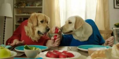 Campania de Paste Vodafone: clipe de poveste in familie si aplicatiile Shazam si Sapte Seri
