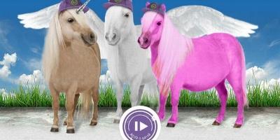 "Unicornul, Pegasul si Poneiul Roz – ambasadori in aplicatia ""REda o sansa"" pentru RE Concept"