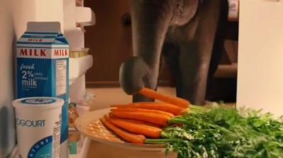 Residence Inn - Elephant