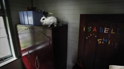 RSPCA - Rabbit