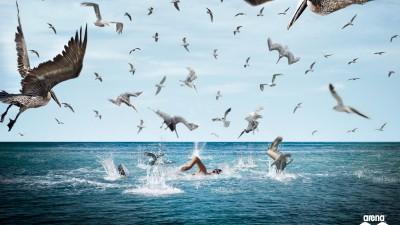 Arena swimwear - Birds
