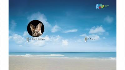 Aruba - God/ Day 6