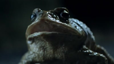 Ford - Cane Toad Road