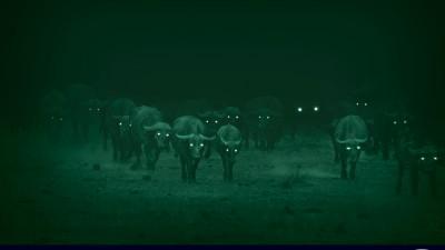 Land Rover Defender - Night Eyes, Buffalo