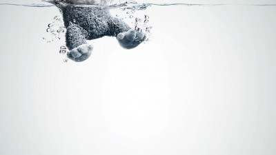 Lenor - Gorilla