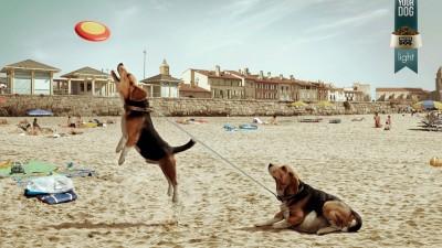 Master Dog - Free your dog, Beach