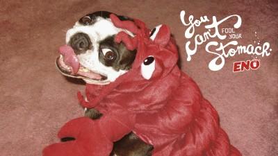 Eno anti-acid - Lobster