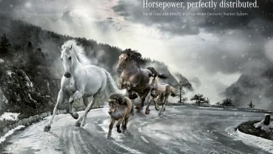 Mercedes-Benz - Horses