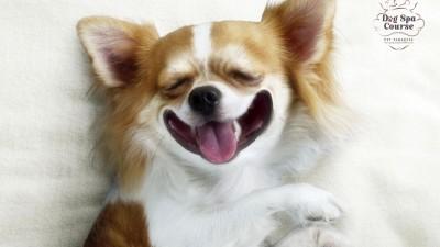 Pet Paradise Park - Heaven Of Chihuahua