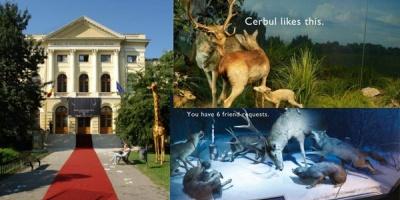 """Povestea unui muzeu """"cool"""": relansarea, profilul vizitatorilor si comunicarea Muzeului Grigore Antipa"""