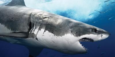 Discovery Channel lanseaza rechinii virtuali pentru a promova Shark Week