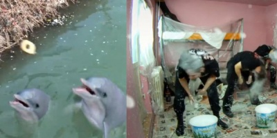 Delfinii din Dambovita si rockerii din Regie recunoscuti la EuroViral 2012