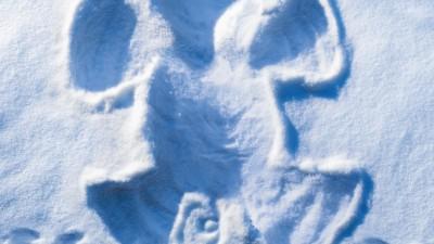 Calgary Farmers' Market - Snow Angels, Pig