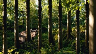 Landscape and Animal Park Goldau - Bear