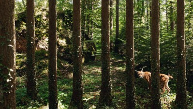 Landscape and Animal Park Goldau - Lynx