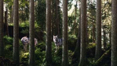 Landscape and Animal Park Goldau - Wolves