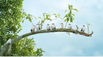 Stihl Chainsaw - Birds