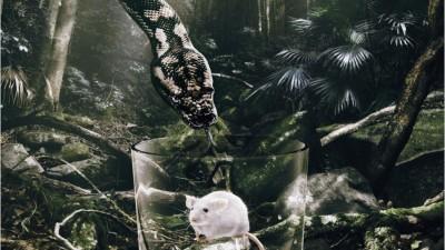 Diageo Australia Pampero - Snake