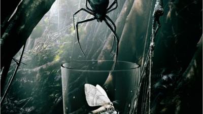 Diageo Australia Pampero - Spider