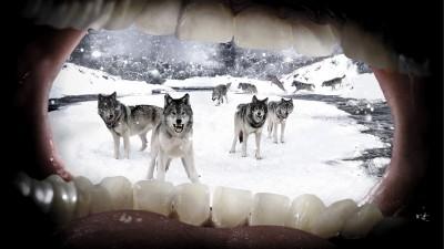 Parodontax - Wolves