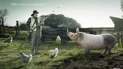Findus - Pig