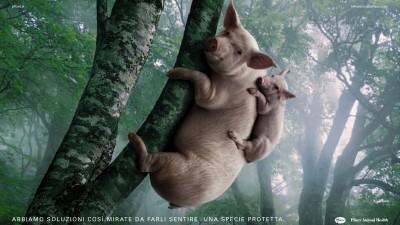 Pfizer Animal Health - Koala