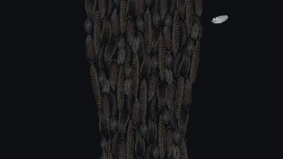Guinness - Feathers