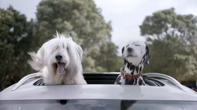 Volkswagen Weather - Dogs