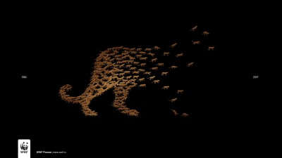 WWF Russia - Leopards