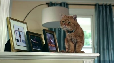 Nike - Free Cat Flap