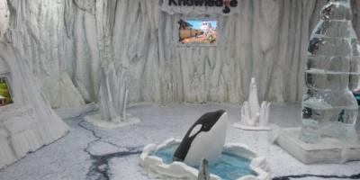 BBC a adus un urs polar in Pasajul de la Universitate