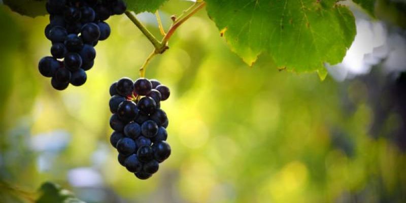 Vinuri romanesti premiate cu aur si argint la Concours Mondial de Bruxelles si International Wine Contest Bucharest