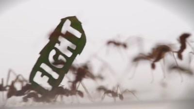 WWF - Ant Rally