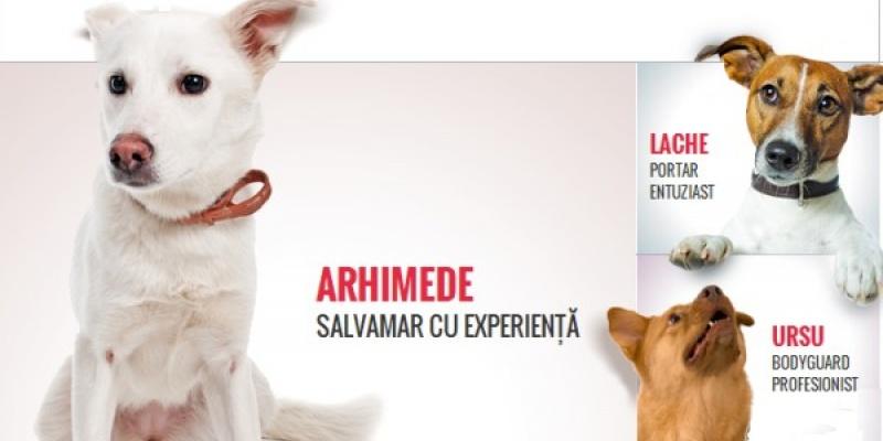 De ce sa adopti un caine cand poti sa adopti un caine cu experienta?
