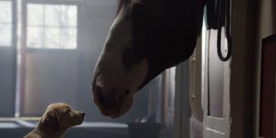 Prietenia dintre un catelus si un cal - reteta de succes Budweiser