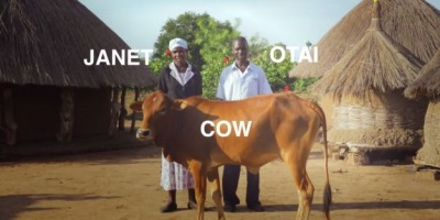 Innocent trimite vaci in Uganda prin Lantul Binelui
