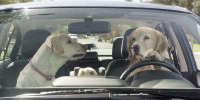 Obiceiuri cainesti la volanul unui Subaru