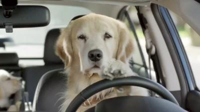 Subaru - In the Dog House