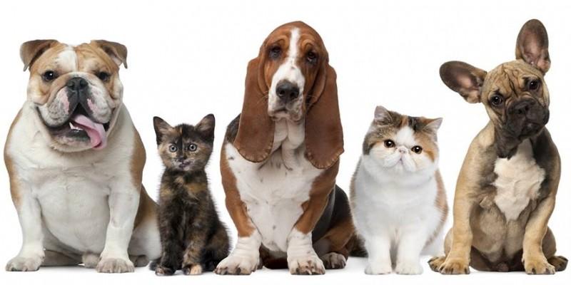 Animal Casting Time le gaseste de lucru actorilor cu patru picioare