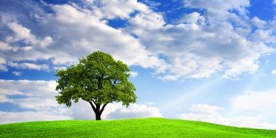 Un client care alege sa primeasca raportul de activitate al cardului pe mail = 1 copac plantat de UniCredit