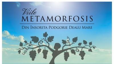 Producatorul de vinuri Vitis Metamorfosis primeste un nou nume si o alta identitate vizuala