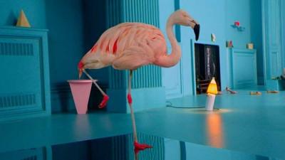 De ce sta pasarea flamingo intr-un picior? #BecauseNoReason