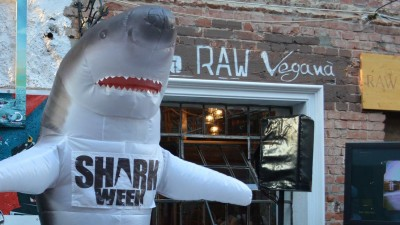 Ultimele 3 zile de Shark Week de pe Discovery Channel - Rechini, rechini, rechini