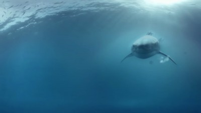 Ce face un rechin in mijlocul desertului?